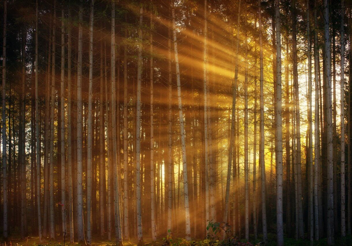 Starter Templates Image - forest, sunlight, sunbeam-3124098.jpg